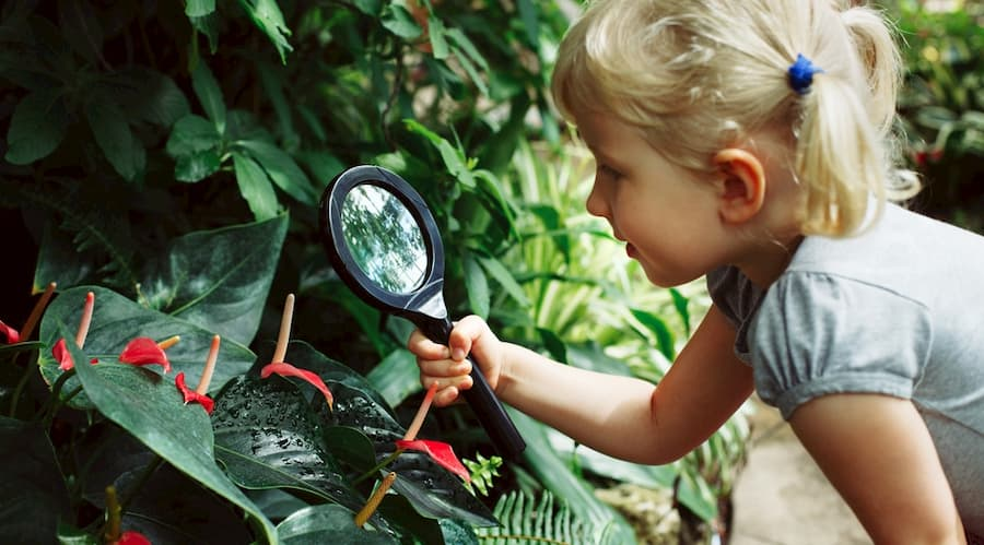 a child observes a tropical plant at the Denver Botanical Garden with a magnifying glass