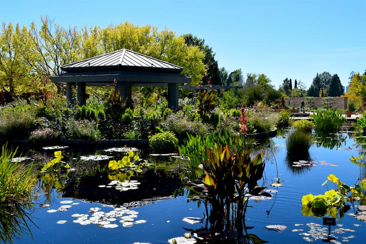 Lake at Denver Botanical Gardens