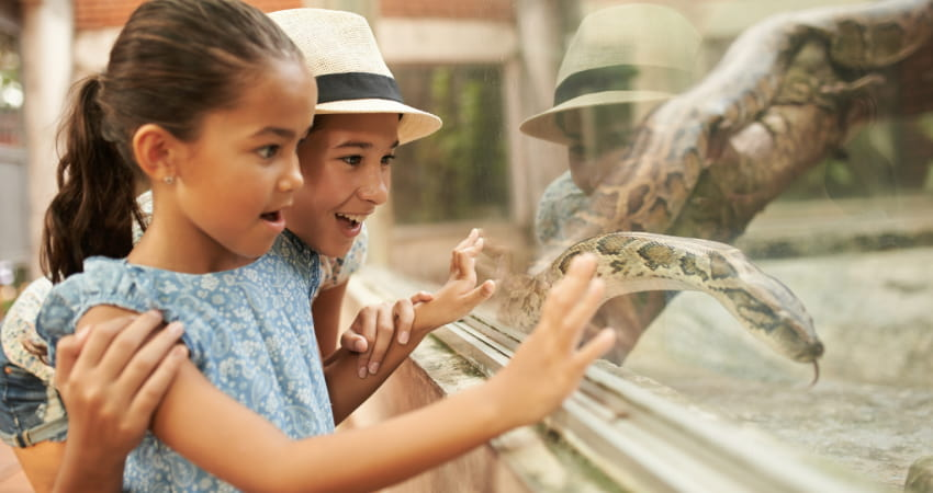 two children marvel at a boa constrictor in a zoo enclosure
