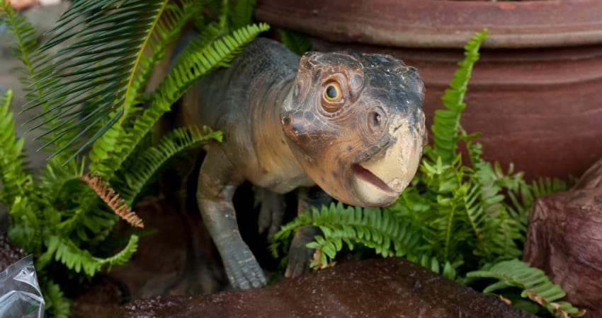 a model of a baby dinosaur in a natural history museum