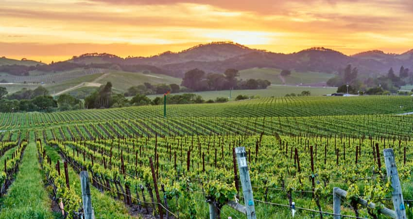 The sunset peeking over hills in a Napa Valley vineyard