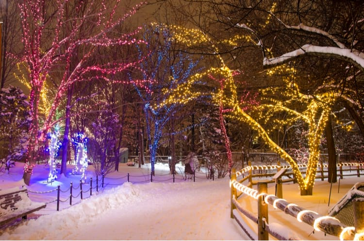 colorful holiday lights on winter trees lining a path covered with snow