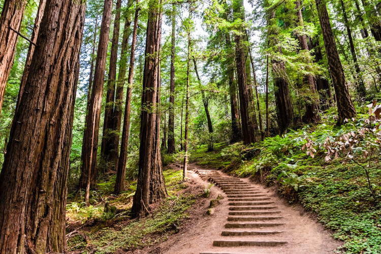a view of a stairway path going up a hill in a green forest
